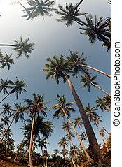 vue., paume, noix coco, arbres, perspective
