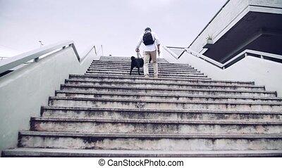 vue, personne agee, marche, guide, aveugle, haut, city., arrière, homme, chien, escalier