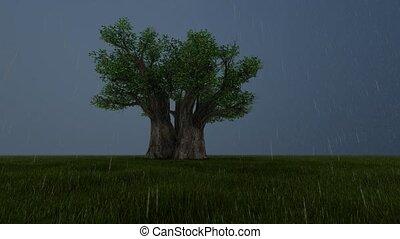 vue., profond, arbre, unique, storm., côté, sombre, forêt