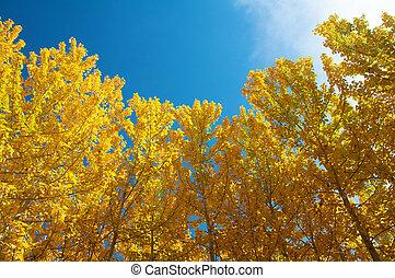 vue, tremble, automne, arbres