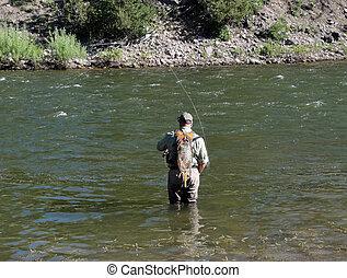 vuele pescando, en, el, montañas rocosas