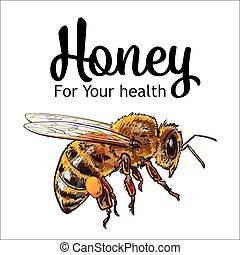 vuelo, aislado, abeja, miel, plano de fondo, blanco