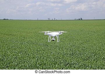 vuelo, blanco, quadrocopters, encima, un, campo, de, trigo