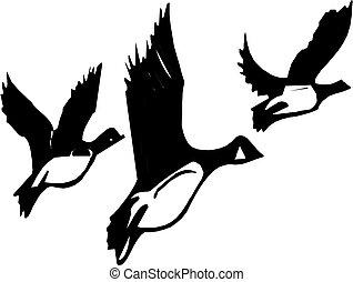 vuelo, gansos