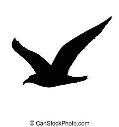 vuelo, gaviota, concepto, silueta