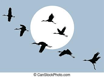 vuelo, grúa, en, solar, plano de fondo, vector, ilustración
