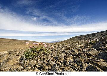 vulcanico, tundra, paesaggio