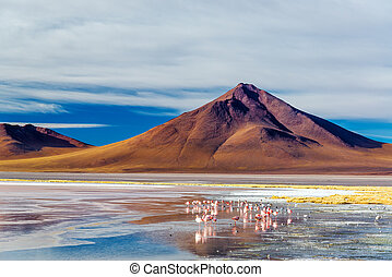 vulcano, flamingoes