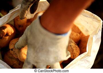 vullen, de, zak, met, aardappels