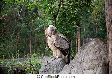 vulture landing on the branches.