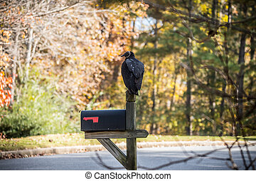 Vulture perched on mailbox
