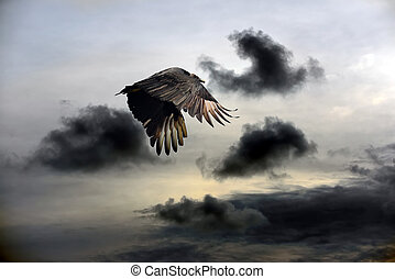 Vulture Sky - Turkey Vulture flying against a stormy sky