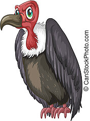 Vulture - Illustration of a closeup vulture