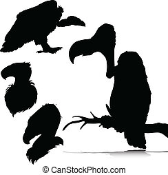 vulture vector silhouettes