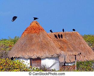 vultures, cozumel, telhado