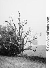 Vultures Roosting in Dead Tree, B&W