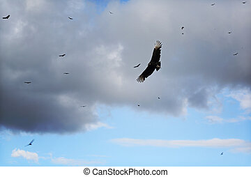vultures, swirling