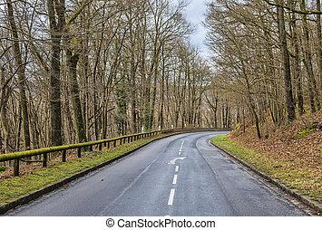 vuoto, foresta, strada