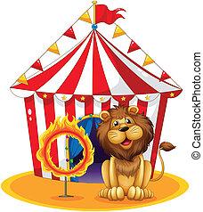 vuur, naast, hoepel, circus, leeuw