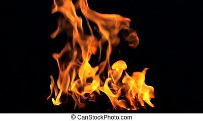 vuur, vlam, op, zwarte achtergrond, lus