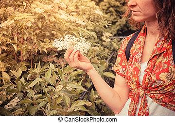 vybírání, manželka, elderflowers, mládě