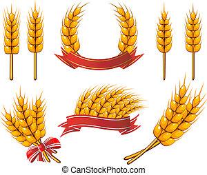 vybírání, o, design, elements., pšenice