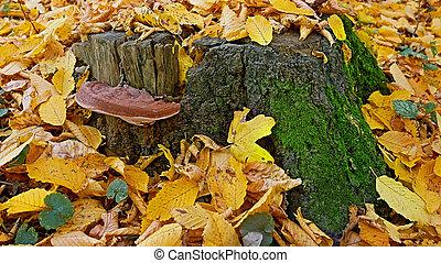 vykácet, tinder, houba, podzim