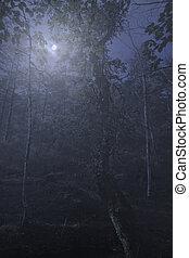 wälder, neblig, vollmond, nacht