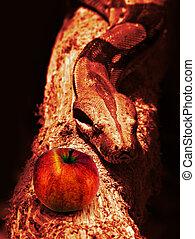wąż, i, czerwone jabłko