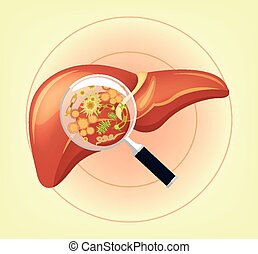 wątroba, z, zarodki, i, bacteria