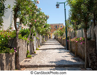 włochy, amalfi, ravello., ulica, coast., rozkwiecony, oleanders, wąski, stromy
