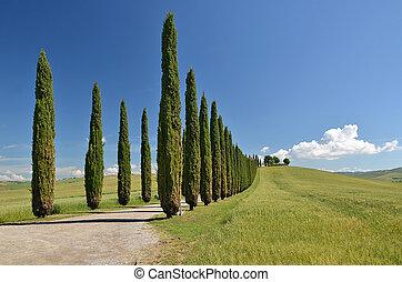 włochy, road., cyprys, tuscany, drzewa, wiejski, wzdłuż
