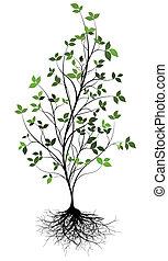 w, encima, árbol, vector, gree, raíz