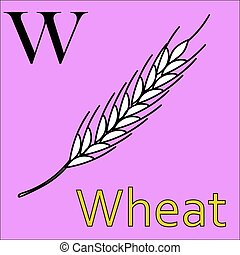 W letter. Vector alphabet. Coloring book wheat
