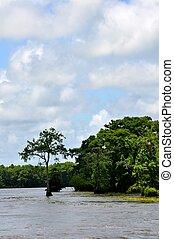 Waccamaw River Portrait
