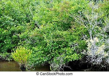 Waccamaw River Trees 2 - Waccamaw River Trees