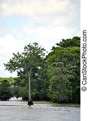 Waccamaw River Trees 8 - Waccamaw River Trees