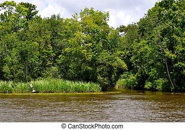 Waccamaw River trees - Waccamaw River Trees