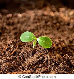 wachsen, gartenerde, pflanze