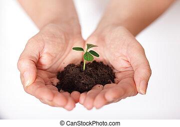 wachsen, kugel, schuss, freigestellt, gehalten, haufen , frisch, klein, erde, hands.