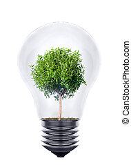 wachsen, licht, pflanze, innenseite, zwiebel