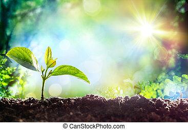 wachsen, pflanzenkeim, -, anfang, von, a, neu