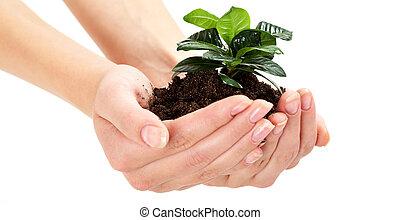wachsen, pflanzenkeim