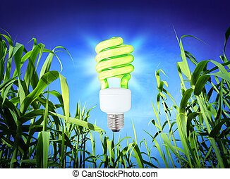wachstum, ökologie, -, cf, lampe