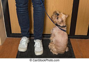 wachten, wandeling, dog
