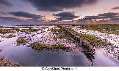 Wadden sea Salt marsh at sunset - Wadden sea mud-plains of...