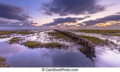 Wadden sea Tidal marsh at sunset