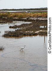 wading bird in the swamp of the Venetian Lagoon