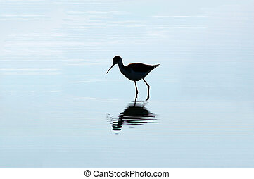 Wading Bird Silhouette Reflected in Blue Water
