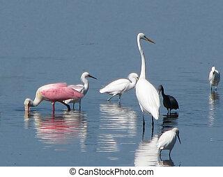 wading birds Ding Darling Wildlife Refuge Sanibel Florida